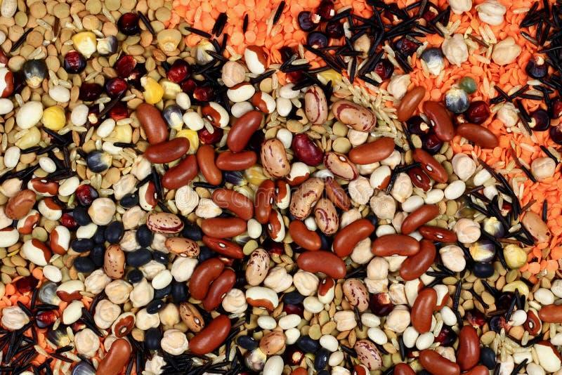Sementes, feijões, sementes que estão cozinhando fervendo fotografia de stock royalty free