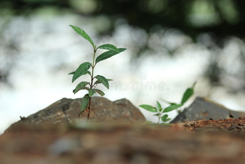semenzale fotografia stock