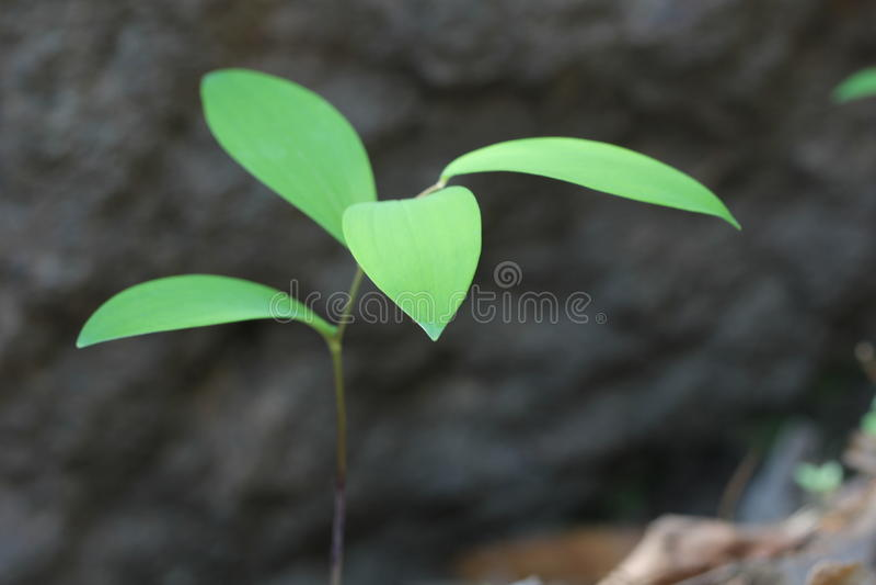 Semenzali verdi fotografie stock