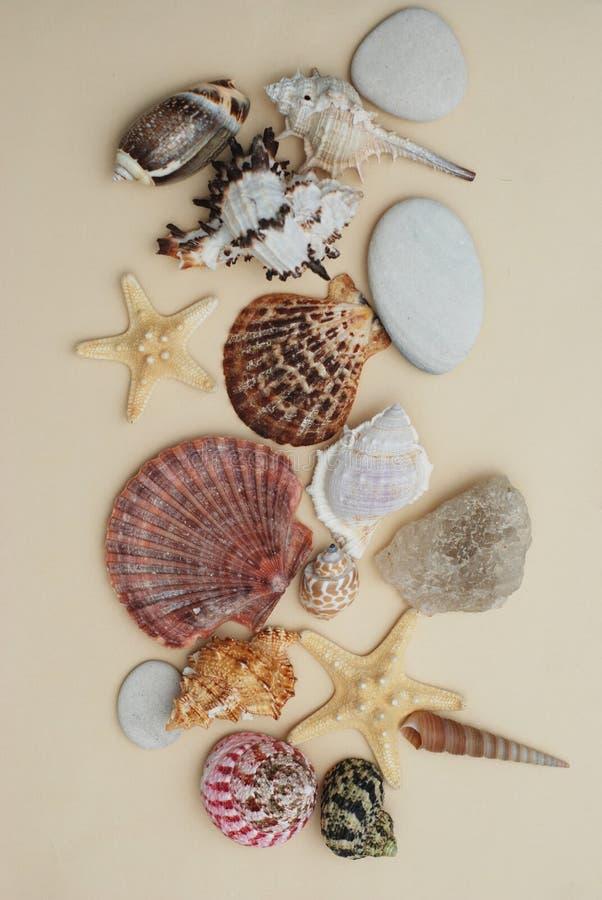 semester för sommar för strandbegreppssnäckskal blandning av skal och stenar över elfenbenbakgrund arkivbild