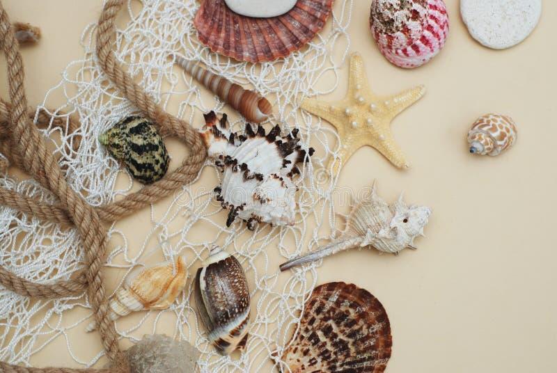semester för sommar för strandbegreppssnäckskal blandning av skal och stenar över elfenbenbakgrund royaltyfri fotografi