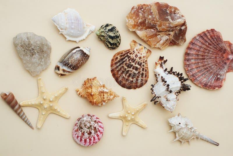 semester för sommar för strandbegreppssnäckskal blandning av skal och stenar över elfenbenbakgrund arkivbilder