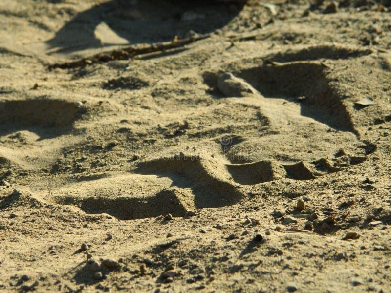 semester för spår för sommar för sand för strandfottryck royaltyfri fotografi