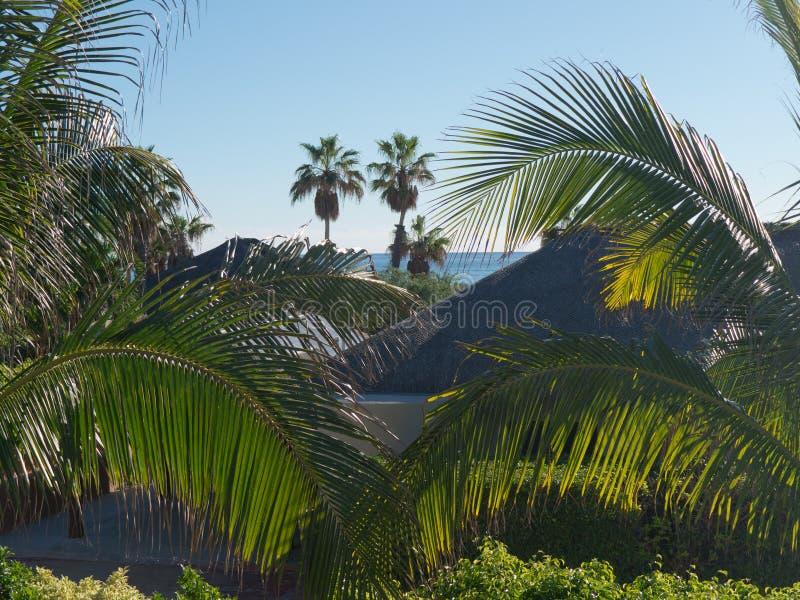 Semestern kallar, kopplar av i en semesterby som omges av palmträd arkivfoton