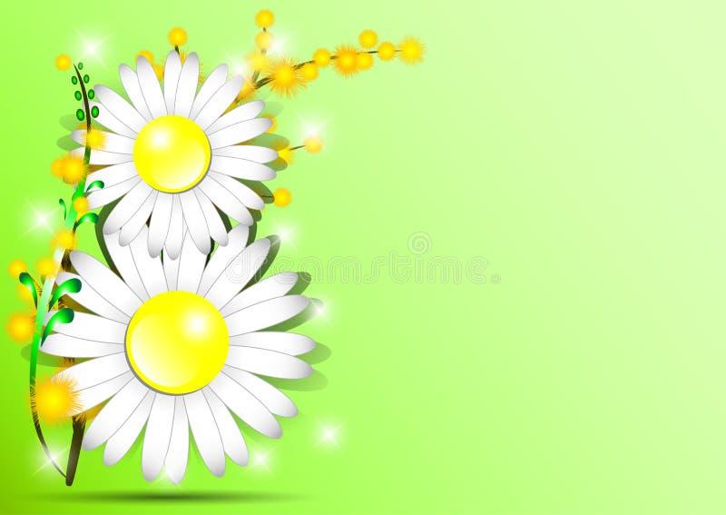 Semestra hälsningkortet med mimosan och form av 8 från tusenskönor på grön bakgrund på internationella kvinnors dag Mars 8 vektor illustrationer