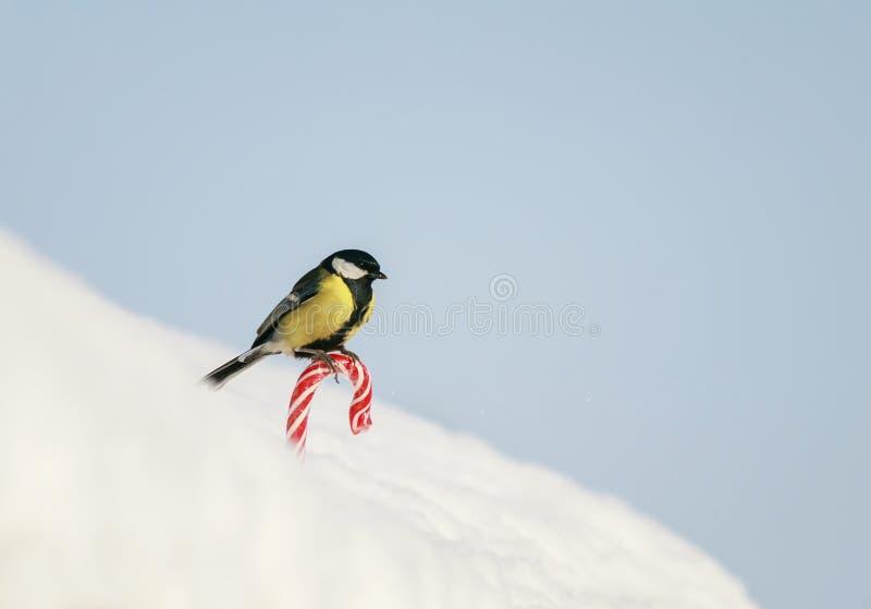 semestra kortet med fågeln vid fågeln är på den söta röda söta vita snön på gatan på bakgrunden av blå himmel arkivfoton