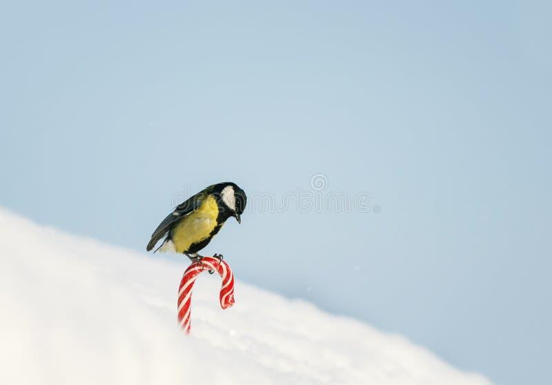 semestra kortet med fågeln vid fågeln är på den söta röda söta vita snön på gatan på bakgrunden av blå himmel royaltyfria foton