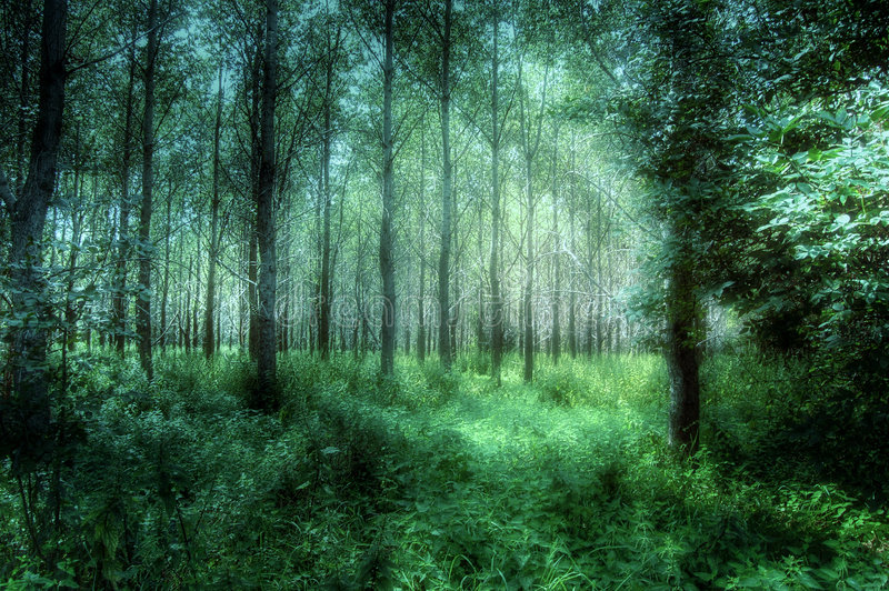 Semi-abstract: Mystical Woods stock image