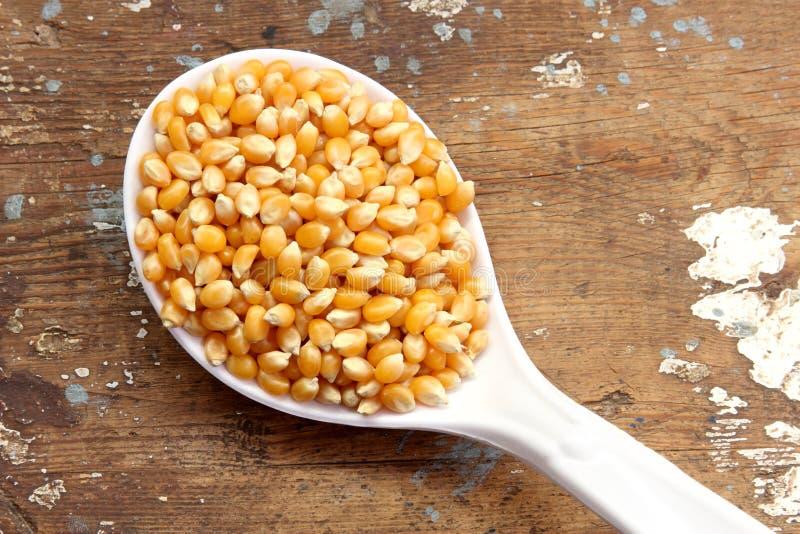 Semi del cereale immagine stock
