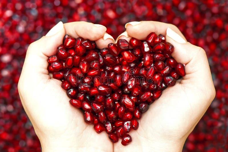 Semi del melograno che modellano cuore in mani fotografie stock