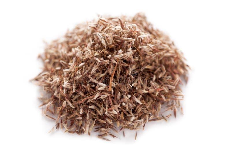 Semi dell'erba della palmarosa (martinii di Cymbopogon) fotografie stock