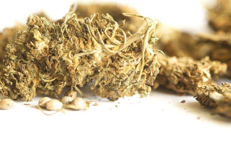 Semi della cannabis dell'hashish e della canapa indiana immagini stock libere da diritti