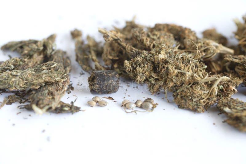 Semi della cannabis dell'hashish e della canapa indiana fotografia stock libera da diritti