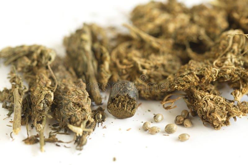 Semi della cannabis dell'hashish e della canapa indiana immagine stock libera da diritti