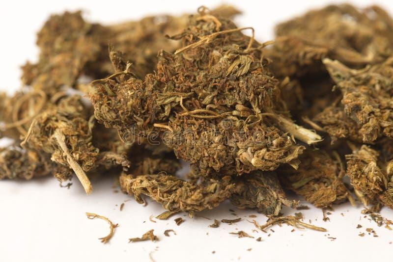 Semi della cannabis dell'hashish e della canapa indiana fotografie stock libere da diritti