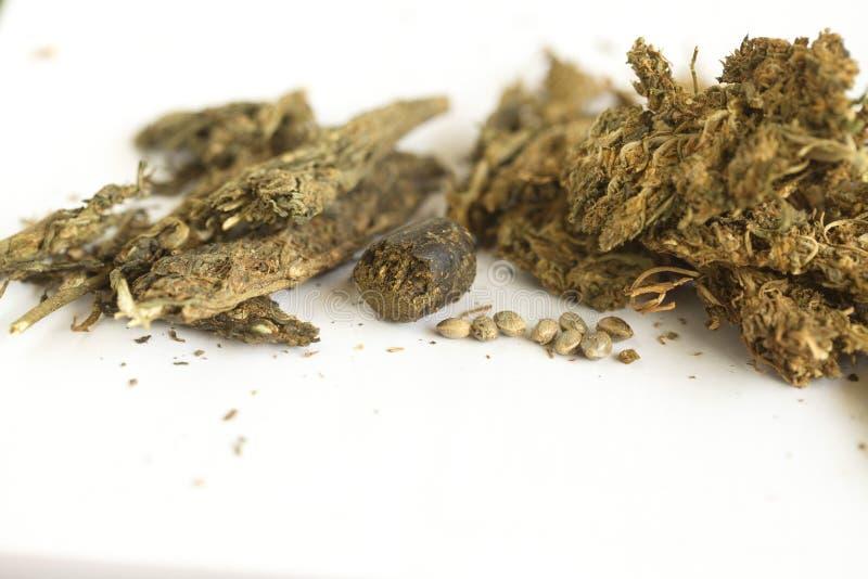 Semi della cannabis dell'hashish e della canapa indiana immagine stock