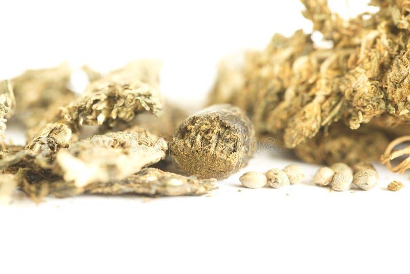 Semi della cannabis dell'hashish e della canapa indiana fotografia stock