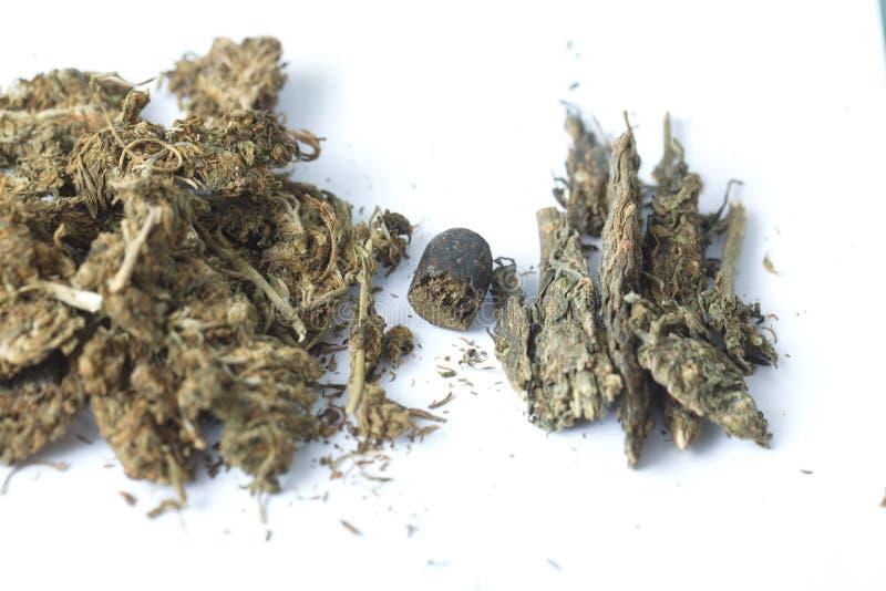 Semi della cannabis dell'hashish e della canapa indiana fotografie stock