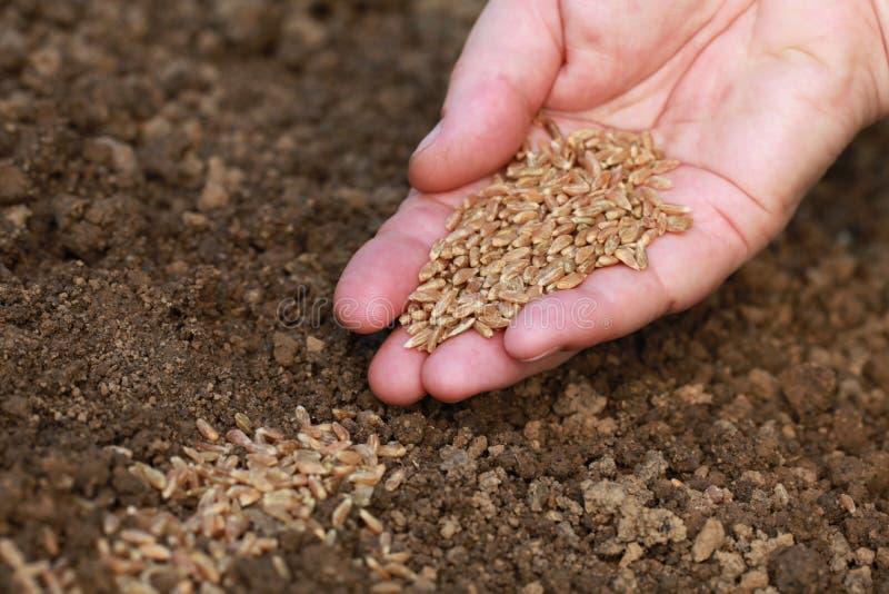 Semi della semina in un giardino fotografia stock libera da diritti