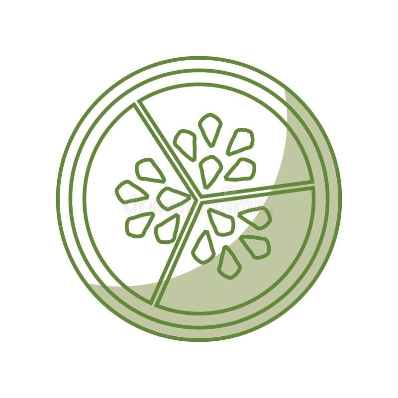 Semi della verdura del cetriolo illustrazione di stock
