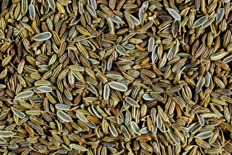 Semi di finocchio - aneto di verdure, spezia Finocchio - la spezia, semi oblunghi di colore di verdastro-Brown, ha un aroma dolce immagini stock