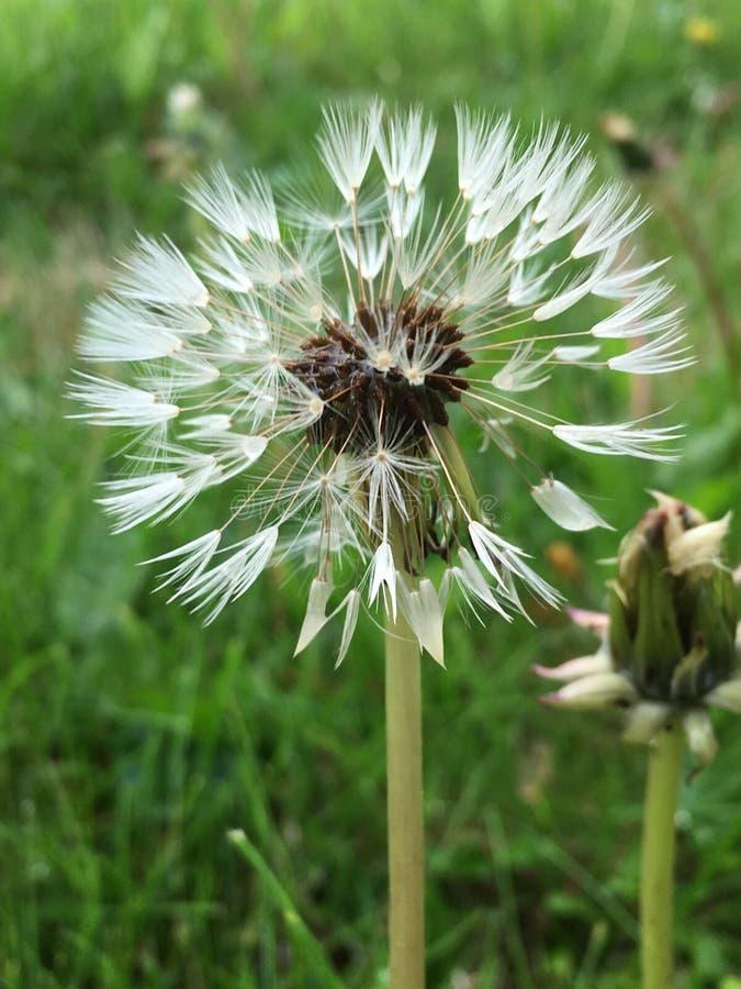 Semi di fiore al sole fotografia stock libera da diritti