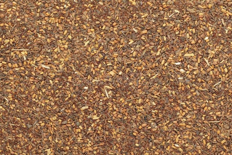 Semi di mogano rossi organici di eucalyptus pellita) immagini stock libere da diritti