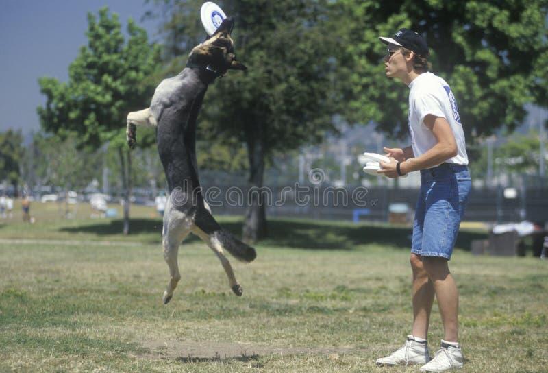 Semi-Finals собачьего состязания Frisbee стоковое изображение