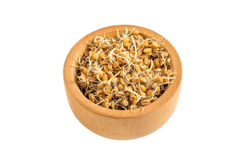 Semi germinati freschi del grano in ciotola su fondo bianco fotografie stock