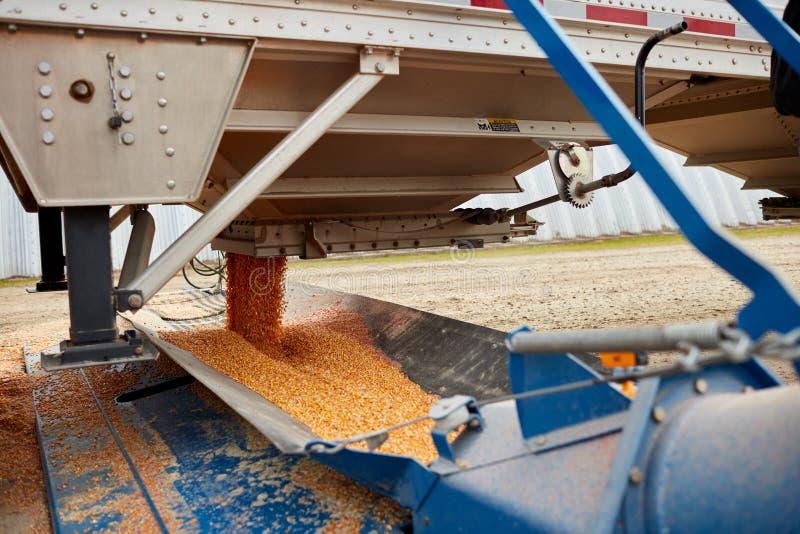 Semi remorque étant débarquée de son maïs frais photo libre de droits