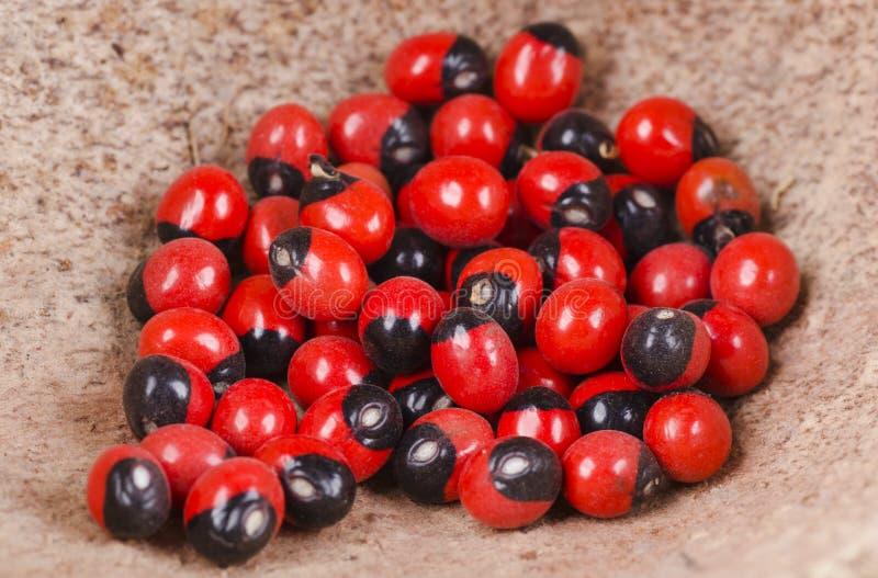 Semi rossi e neri fotografia stock
