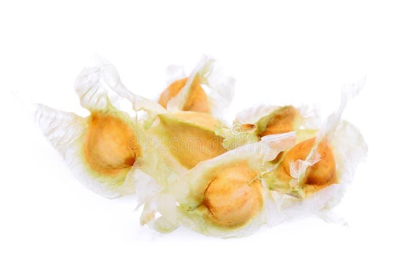 Semi secchi dell'albero di bacchetta di moringa isolati su bianco immagini stock