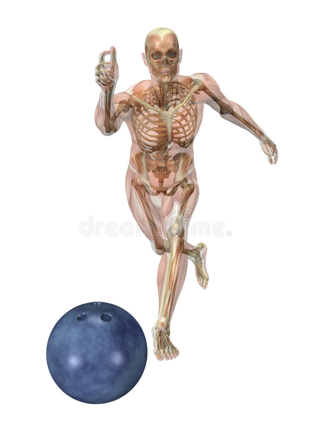 Semi-transparent Muscles over Skeleton - Bowling royalty free illustration