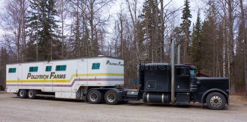 Semi una tracción de un remolque llenó de los caballos de una granja en Canadá septentrional fotografía de archivo