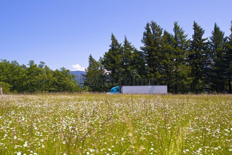Semi vrachtwagen tussen bloemenweide en altijdgroene sparren stock afbeeldingen