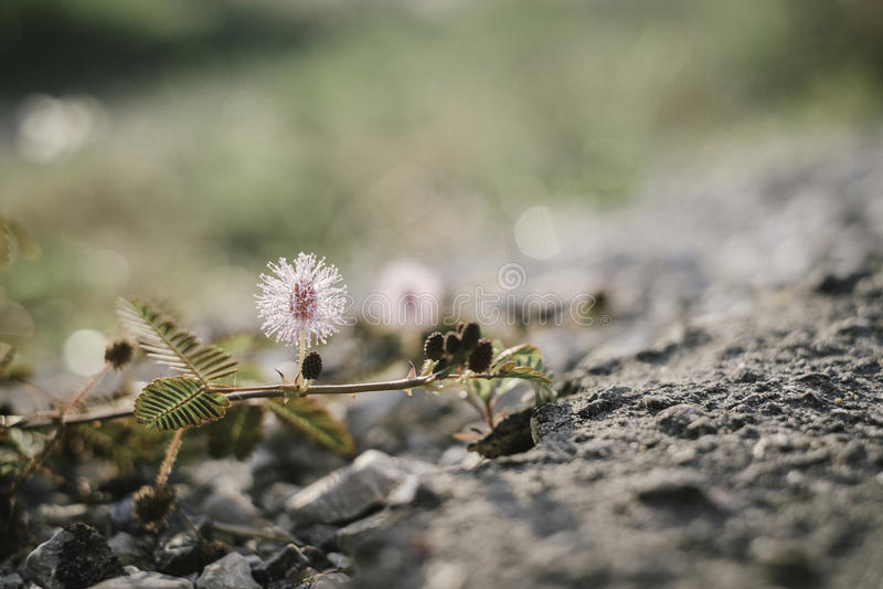 Semilla de flores del primer en la tierra fotos de archivo
