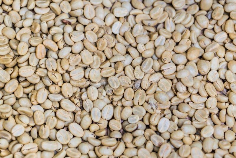 Semilla del café con leche o grano de café crudo sin tostar fotografía de archivo libre de regalías