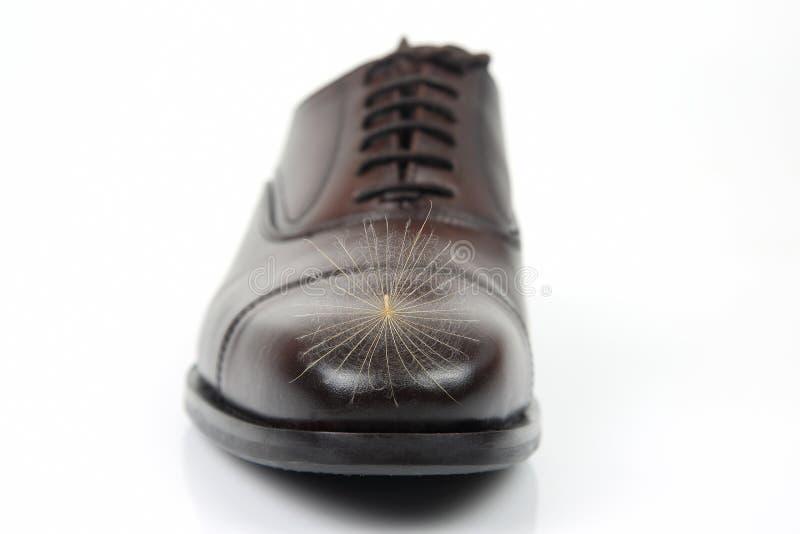 Semilla del diente de león en el dedo del pie de los zapatos clásicos del ` s de los hombres imágenes de archivo libres de regalías