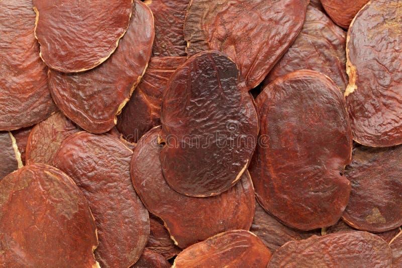 Semilla híbrida orgánica de la teca o de Palaash (monosperma del Butea) imagen de archivo libre de regalías