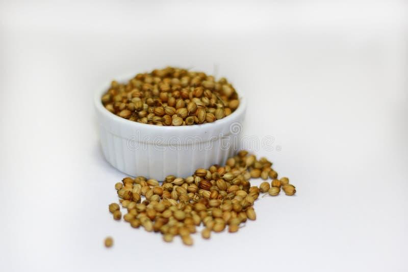 Semillas de coriandro secadas orgánicas imagen de archivo libre de regalías