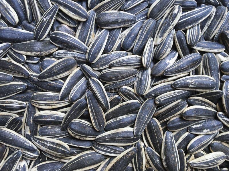 Semillas de girasol, fondo, semillas blancos y negros rayadas imagen de archivo