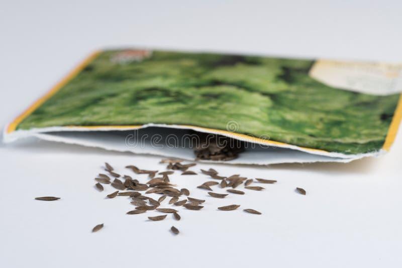 Semillas de la lechuga que desbordan el paquete de la semilla foto de archivo