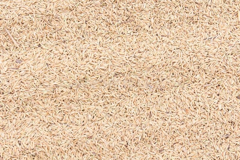 Semillas del arroz fotos de archivo libres de regalías