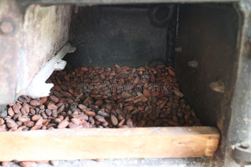 Semillas del cacao en un deshumidificador fotografía de archivo