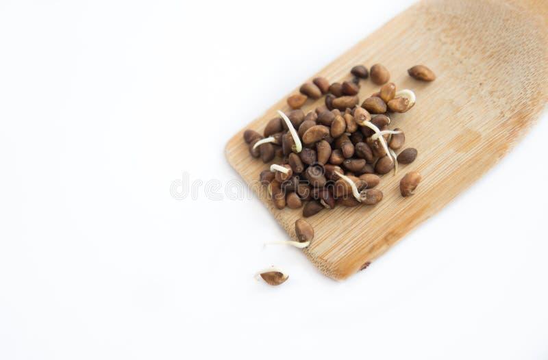 Semillas en la cucharada de madera aislada en blanco fotografía de archivo