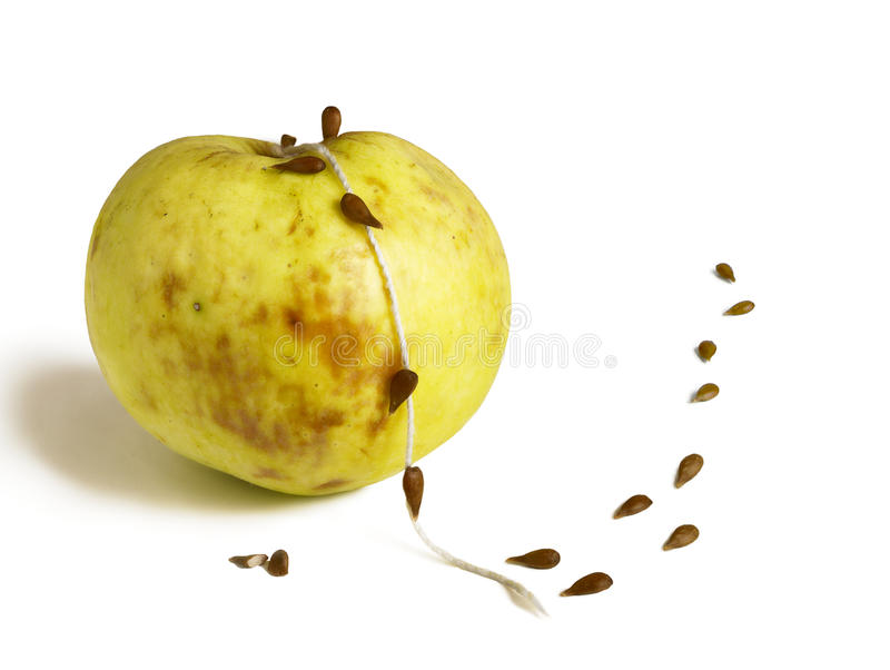 Semillas que se escapan abajo de la cuerda de la manzana estropeada stock de ilustración