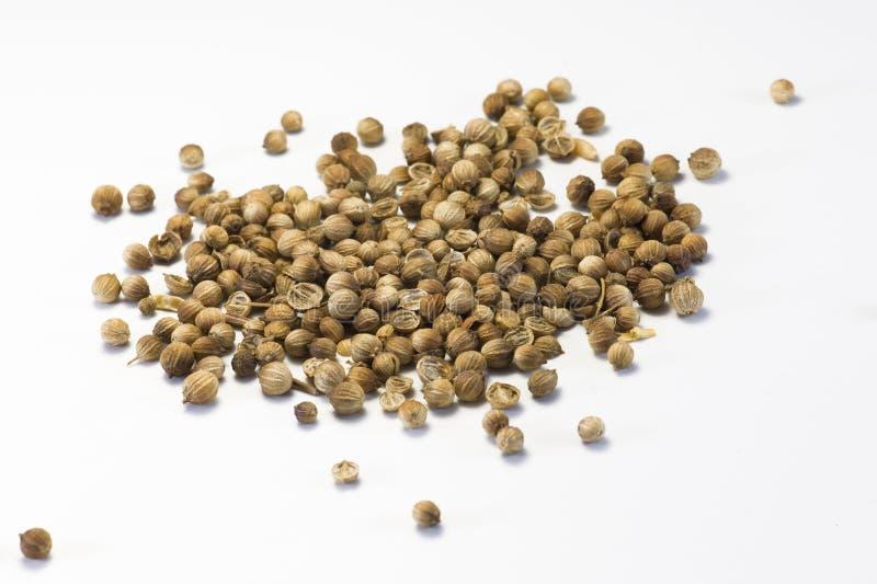 Semillas secadas del cilantro foto de archivo libre de regalías