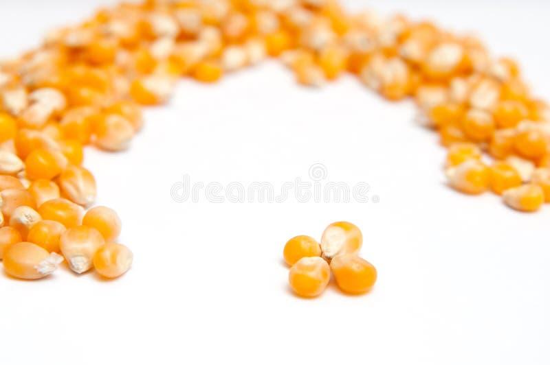 Semillas secadas del maíz imágenes de archivo libres de regalías