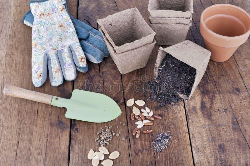 Semillas vegetales en un tablero para los almácigos imágenes de archivo libres de regalías