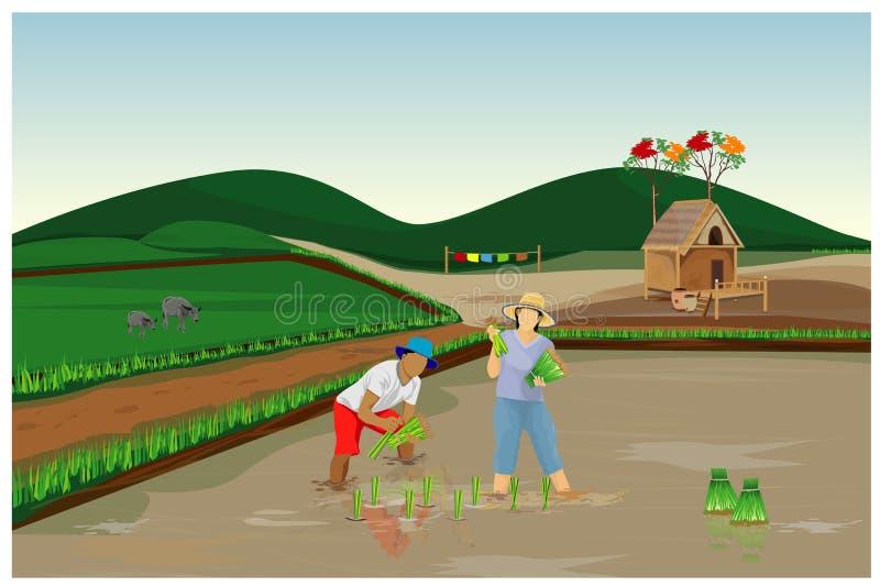 Semina del riso del trapianto dell'agricoltore royalty illustrazione gratis